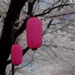 「桜Trick」は僕の脳内8割を構成していると言っても過言ではない