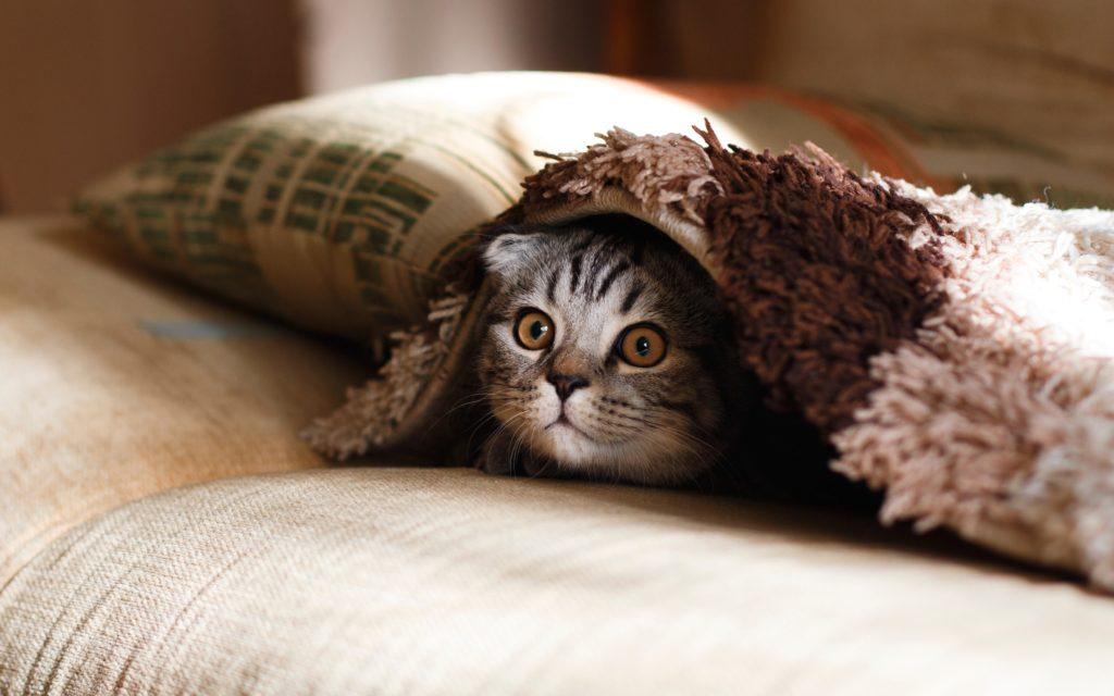 【病気】高齢猫の慢性腎臓病。通院と治療の体験記【腎不全】